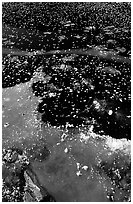 Ice on a small lake. Yellowstone National Park, Wyoming, USA. (black and white)