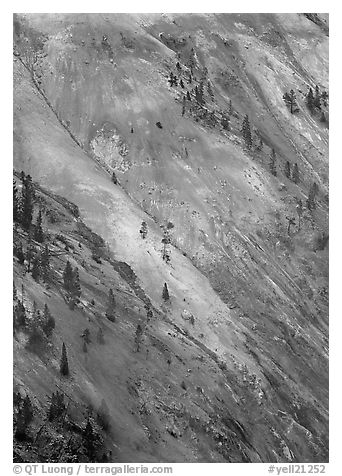 Colorful wall of the Grand Canyon of Yellowstone. Yellowstone National Park (black and white)