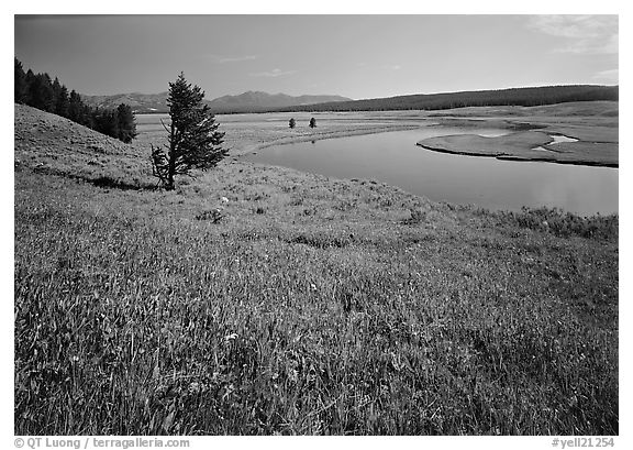 Meadow and bend of the Yellowstone River, Hayden Valley. Yellowstone National Park (black and white)