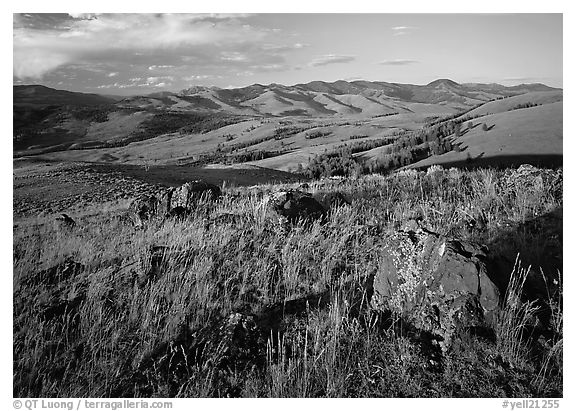 Rocks and grasses on Specimen ridge, late afternoon. Yellowstone National Park (black and white)