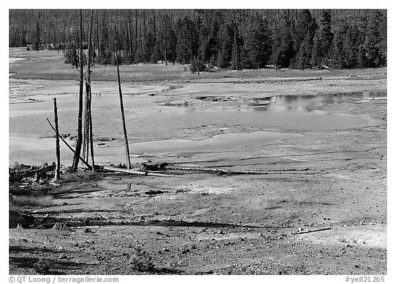 Dead trees and turquoise pond in Norris Geyser Basin. Yellowstone National Park (black and white)