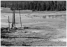 Dead trees and turquoise pond in Norris Geyser Basin. Yellowstone National Park, Wyoming, USA. (black and white)