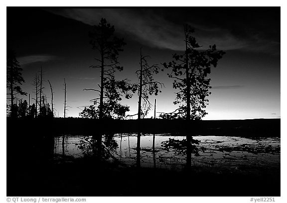 Trees near Fountain Paint Pot at sunset. Yellowstone National Park (black and white)