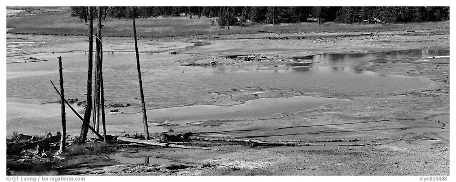 Thermal pond and dead trees. Yellowstone National Park (black and white)