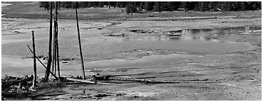 Thermal pond and dead trees. Yellowstone National Park (Panoramic black and white)