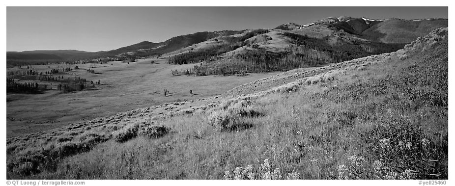 Mountain slopes with wildflowers. Yellowstone National Park (black and white)