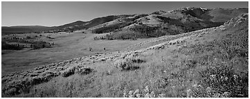 Mountain slopes with wildflowers. Yellowstone National Park (Panoramic black and white)