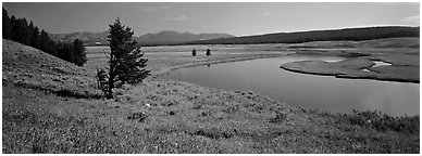 River and verdant meadows. Yellowstone National Park (Panoramic black and white)
