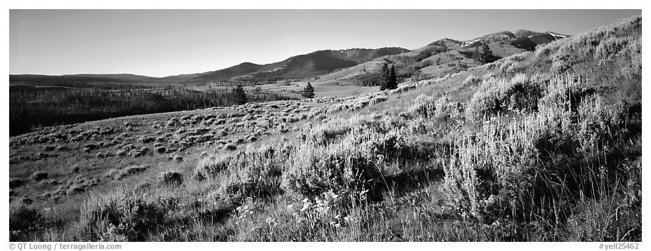Gentle slopes covered with summer wildflower. Yellowstone National Park (black and white)