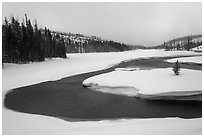 Lewis River valley in winter. Yellowstone National Park ( black and white)