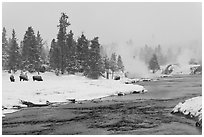 Firehole river and bison in winter. Yellowstone National Park, Wyoming, USA. (black and white)