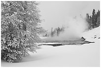 Snowy landscape with distant thermal pool. Yellowstone National Park, Wyoming, USA. (black and white)
