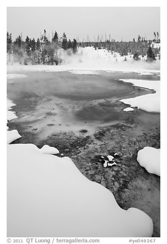 Hot springs and snow, Upper Geyser Basin. Yellowstone National Park (black and white)