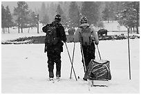Skiers and bisons. Yellowstone National Park, Wyoming, USA. (black and white)
