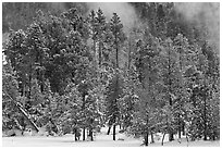 Wintry forest and steam. Yellowstone National Park, Wyoming, USA. (black and white)