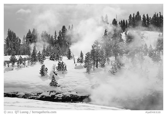 Steam and forest in winter. Yellowstone National Park (black and white)
