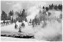 Steam and forest in winter. Yellowstone National Park, Wyoming, USA. (black and white)