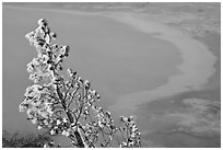 Frosted tree and thermal pool. Yellowstone National Park, Wyoming, USA. (black and white)