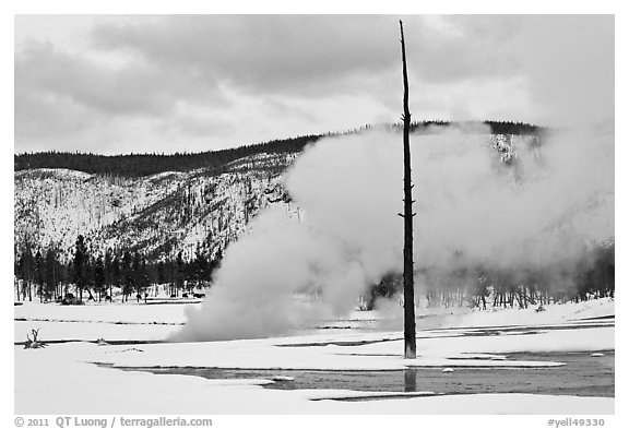 Tree skeleton and thermal steam, Biscuit Basin. Yellowstone National Park (black and white)