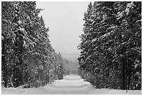 Snow-covered road. Yellowstone National Park ( black and white)
