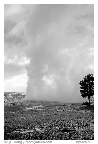 Steam column from Old Faithful Geyser. Yellowstone National Park (black and white)