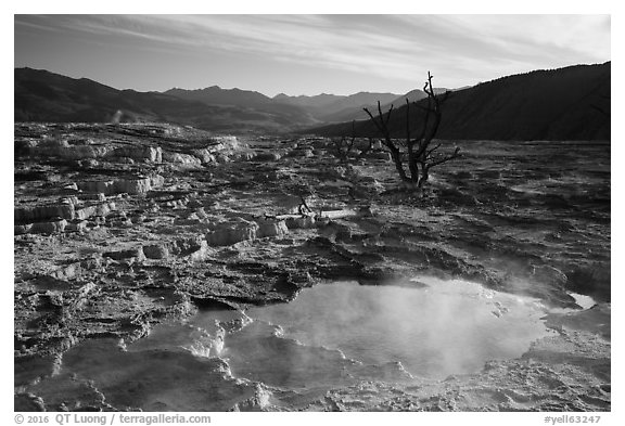 Pool, travertine terraces, and dead trees, Mammoth Hot Springs. Yellowstone National Park (black and white)