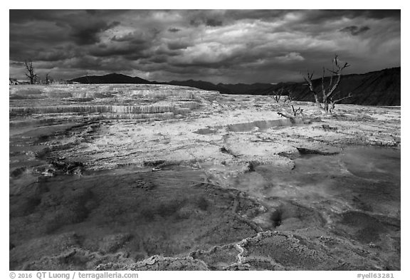 Travertine terraces and dead trees, Main Terrace, afternoon. Yellowstone National Park (black and white)