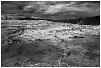 Travertine terraces and dead trees, Main Terrace, afternoon. Yellowstone National Park ( black and white)