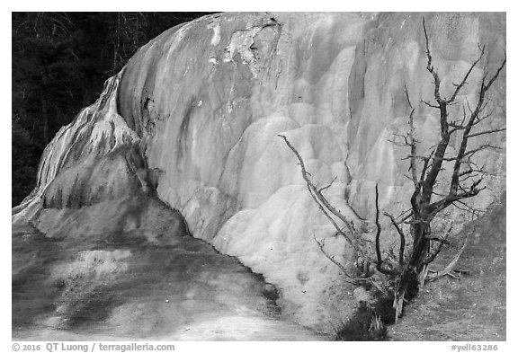 Orange Spring Mound with tree skeleton, Mammoth Hot Springs. Yellowstone National Park (black and white)