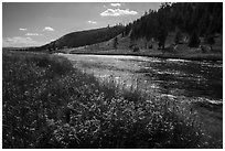 Summer Wildflowers and Firehole River. Yellowstone National Park ( black and white)