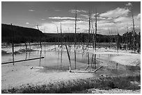 Black Sand Basin with trees killed by hot springs. Yellowstone National Park ( black and white)