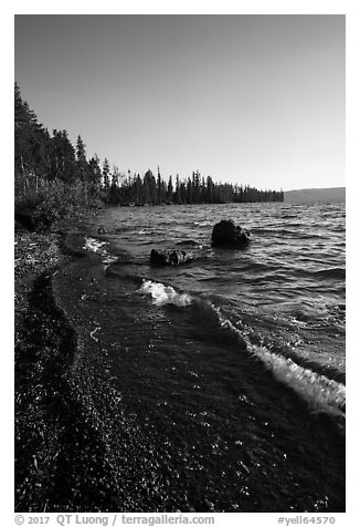 Lewis Lake Shore with black send. Yellowstone National Park (black and white)