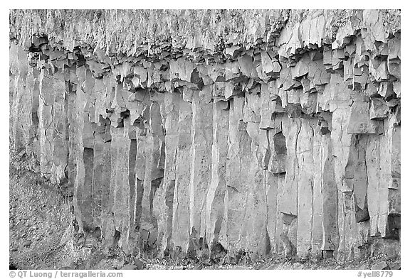 Basalt columns. Yellowstone National Park (black and white)