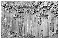 Basalt columns. Yellowstone National Park, Wyoming, USA. (black and white)