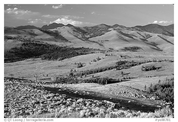 Bushes and rolling Hills in summer, Specimen ridge. Yellowstone National Park (black and white)