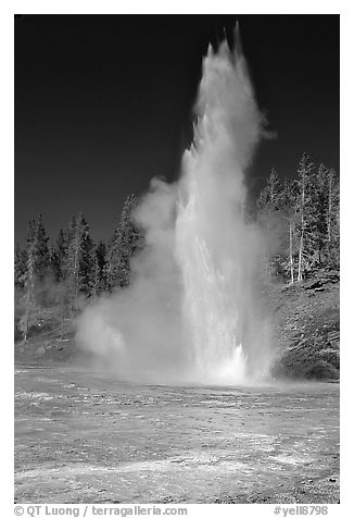 Grand Geyser,  tallest of the regularly erupting geysers in the Park. Yellowstone National Park (black and white)