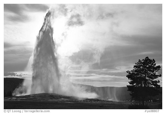 Old Faithful Geyser erupting, backlit by late afternoon sun. Yellowstone National Park (black and white)
