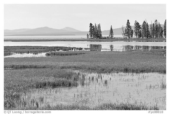 Grasses and Yellowstone Lake near Stemboat Point, morning. Yellowstone National Park (black and white)