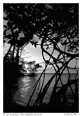 Biscayne Bay viewed through mangal at edge of water, sunset. Biscayne National Park (black and white)