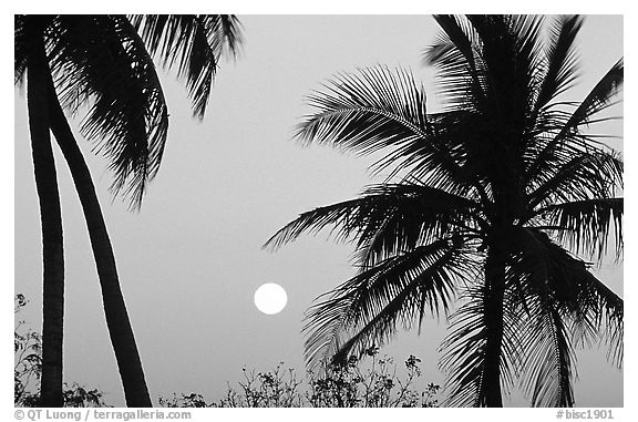 Palm trees and moon, Convoy Point. Biscayne National Park (black and white)