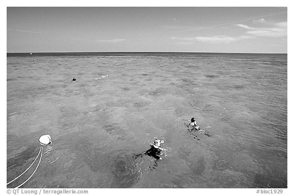 Snorklers. Biscayne National Park (black and white)