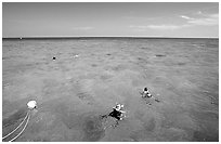 Snorklers. Biscayne National Park, Florida, USA. (black and white)