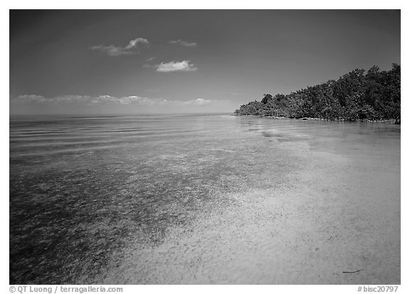 Shoreline and seagrass on Elliott Key near the harbor. Biscayne National Park (black and white)