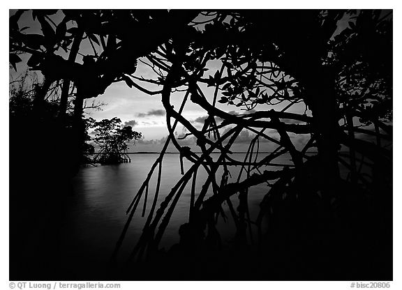 Silhouetted mangroves at dusk. Biscayne National Park (black and white)