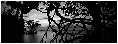 View over Florida Bay through mangrove branches at sunset. Biscayne National Park (Panoramic black and white)