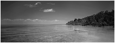 Mangrove shoreline on Florida Bay. Biscayne National Park (Panoramic black and white)