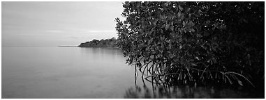 Florida Bay shore at dusk. Biscayne National Park (Panoramic black and white)