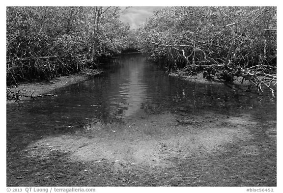 Stream lined up with mangroves. Biscayne National Park (black and white)