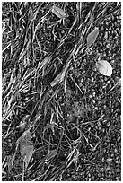 Beached seagrass, mangrove leaves, and gravel. Biscayne National Park, Florida, USA. (black and white)
