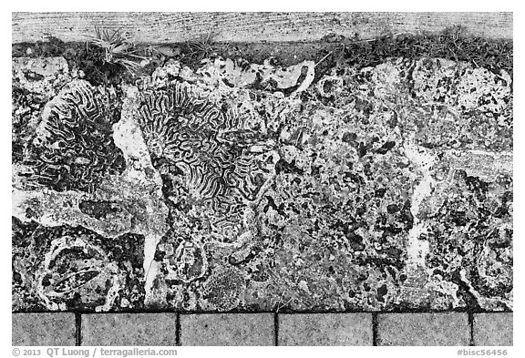 Coral rock used as pavement, Convoy Point. Biscayne National Park (black and white)